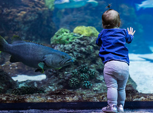 A toddler watches sea creatures swim underwater at the Downtown Aquarium in Denver, Colorado