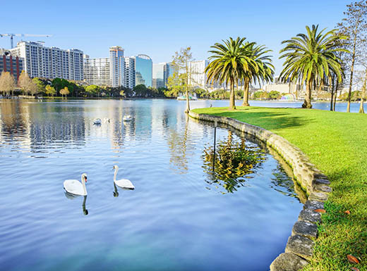 Two swans swim in Lake Eola Park on a sunny day in Orlando, Florida