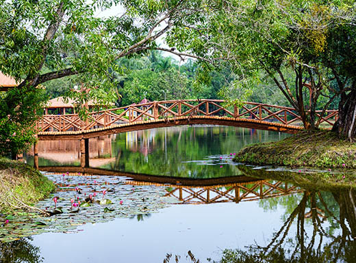 A beautiful wooden bridge sits over a river, being reflected off the water with bright leafy green trees all around it in Orlando, Florida