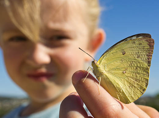 Little girl holds butterfly on her finger