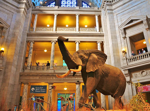 The statue of a large elephant with its trunk raised up is pictured in the lobby of The National Museum of Natural History in Washington, D.C
