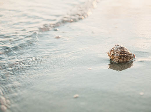 One lonely white and orange seashell sits on the white sand of a beach in Fort Myers, Florida, while the ocean waves lap up against it in late afternoon