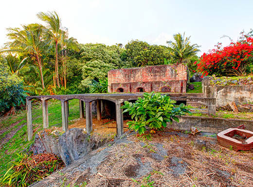 The remnants of a building is seen overgrown with tropical trees and greenery with red flowers at Maui's historic sugar factory in Maui, Hawaii
