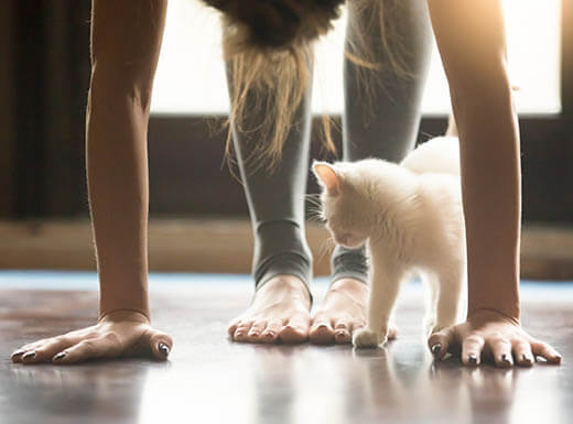A woman in gray leggings doing a yoga position with sun shining behind her and a white kitten crawling underneath her in Portland, Oregon.