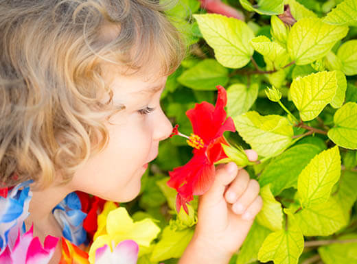 Close up view of young girl with blonde curly hair, wearing a colorful lei, smelling red tropical flower in Honolulu Hawaii