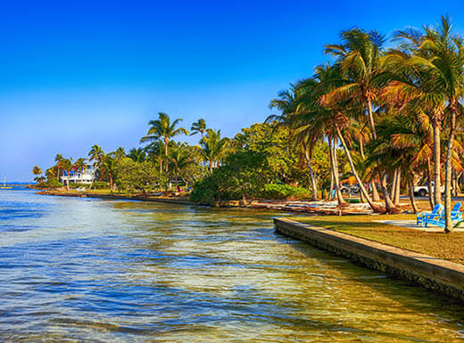 Palm trees are pictured to the right blowing through the breeze along the coast of Pine Island, a short drive from Fort Myers, Floriday, with a clear, bright blue sky in the background