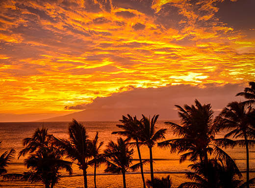 A stunning orange sunset is pictured above the ocean with palm trees in the foreground in Maui, Hawaii