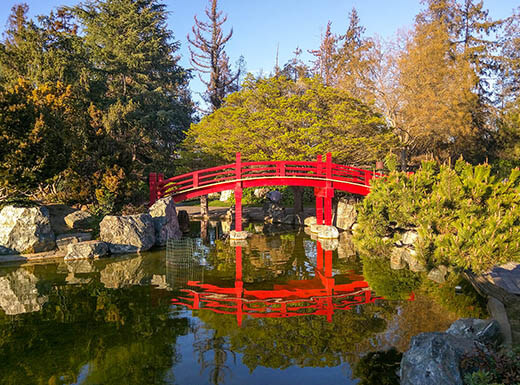 red bridge surrounded by lush greenery in Japanese friendship garden is reflected by the water beneath it in San Jose, California, on sunny day