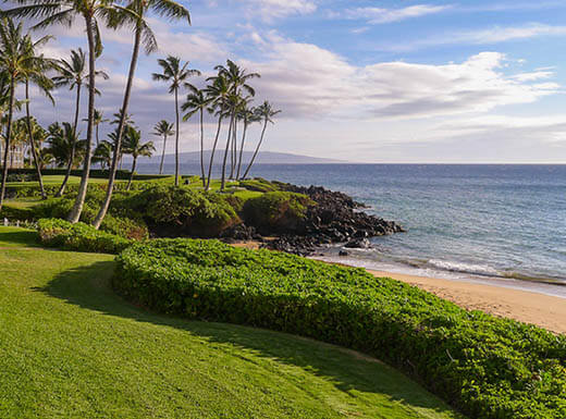 View of coastal walkway in Maui where beautiful green grass and palm trees meet the shore of the Pacific ocean on a sunny day.