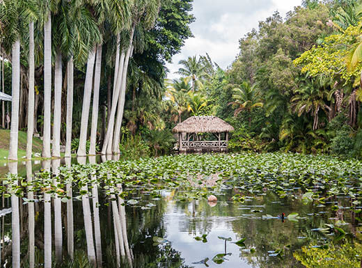 Bonnet House, gardens of museum estate in Fort Lauderdale, Florida shows palm trees growing out of swampy water surrounding a thatched roof structure in the center