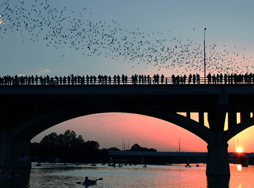 The black silhouette of the South Congress Bridge lined with spectators is pictured in front of a pink-colored sunset sky, with bats flying in the background in Austin, Texas on a summer evening.