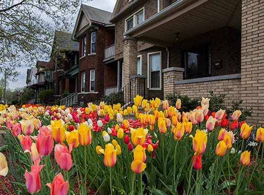 A flowerbed full of blooming yellow and pink tulips outside a row of homes in Detroit, Michigan's oldest neighborhood, Corktown.