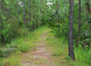 View of a dirt path, the Calusa Nature Trail in Fort Myers, Florida, surrounded by lush greenery on a cloudy day