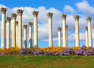 The tall, white National Capitol Columns of the U.S. National Arboretum are pictured on a grassy field with colorful purple bushes in front on a bright afternoon with blue sky and white, puffy clouds in Washington, D.C.
