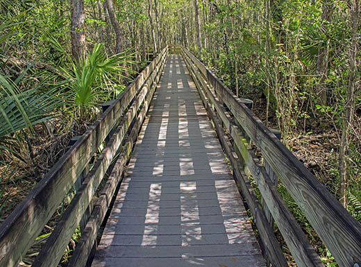 A wooden boardwalk with wooden railings is pictured surrounded by leafy trees and brush on a trail in the Six Mile Cypress Slough Preserve Fort Myers, FL