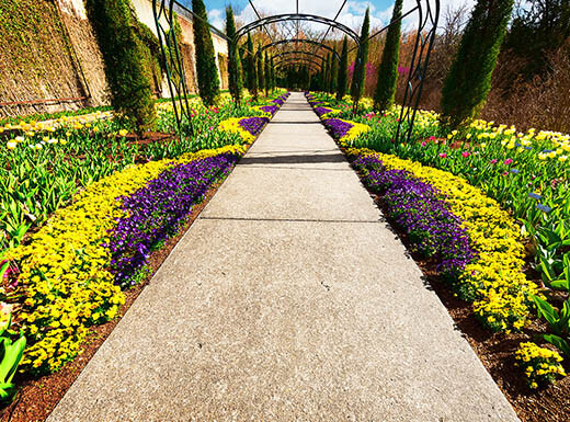 A pathway lined with yellow and purple flosers, yellow and red tulips, metal arches and tall pine trees in Cheekwood Estate and Gardens shines beneath the sun on a warm afternoon in Nashville, Tennessee.