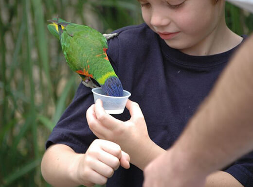 A close-up image of a young boy holding a green parrot on his shoulder, feeding it out of a small plastic container.