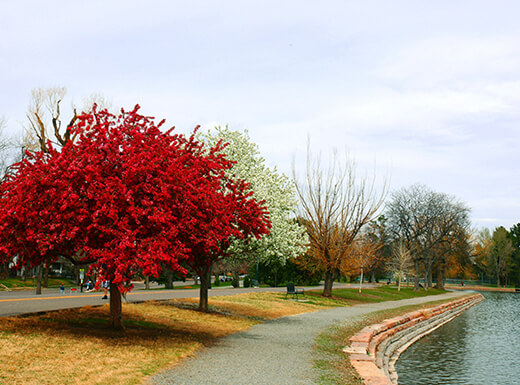 A beautiful red tree on the path along a lake in Washington Park in Denver, Colorado on a cold autumn morning.