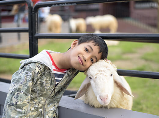 A boy wearing a camouflage jacket rests his head on a sheep's head in front of a gated pasture at a petting zoo in Belleview Park on a cool day in Englewood, Colorado.