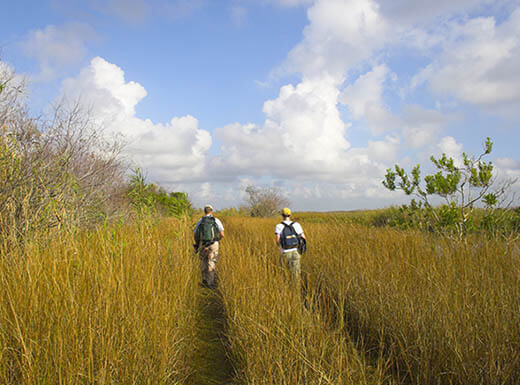 Two male hikers walk through a tall golden grass path while carrying backpacks in the Florida Everglades on a bright summer day.