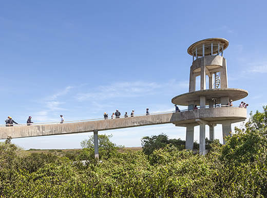 View of tourists on the Shark Valley Observation Tower in the Florida Everglades on a sunny day with towering above trees.