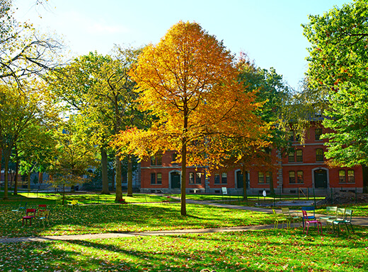 A view of the Harvard Yard in Cambridge with green grass and autumn foliage on a sunny afternoon.