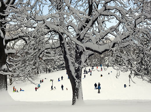 Travelers go sledding on a snow-covered hill in Central Park, NYC on a bright afternoon.